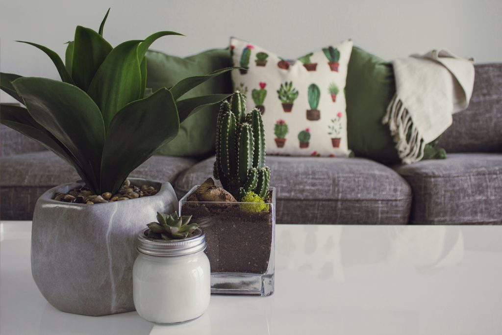 Succulents can improve humidity in your home