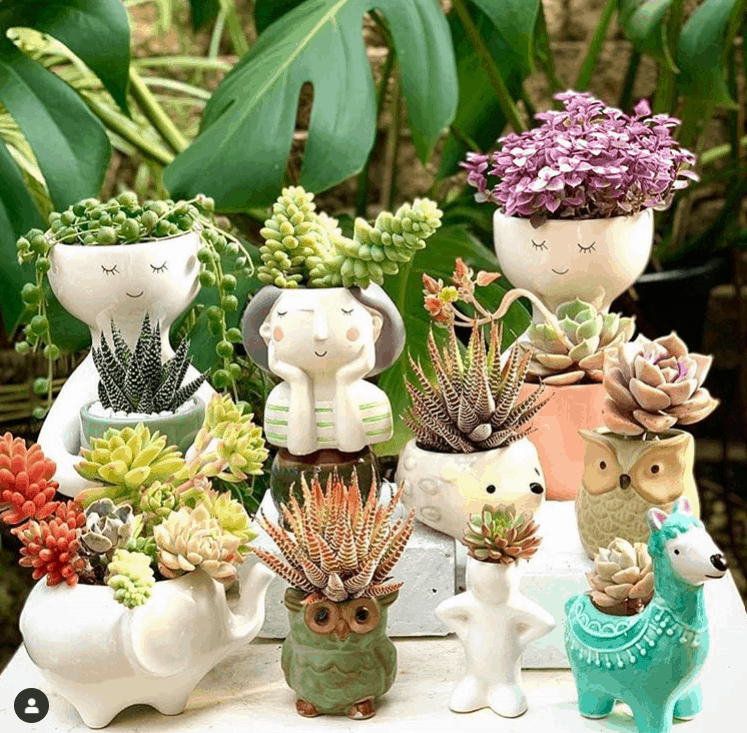 Creative Succulent gift ideas