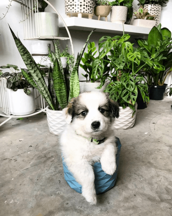 11 Toxic Succulents Harmful to Dogs, Cats, and Other Pets