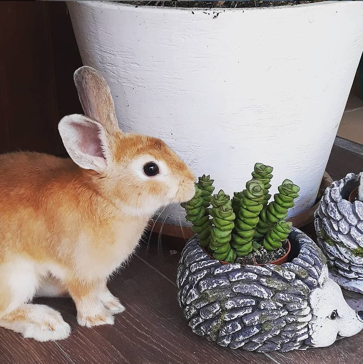 Pet-safe non-toxic succulents