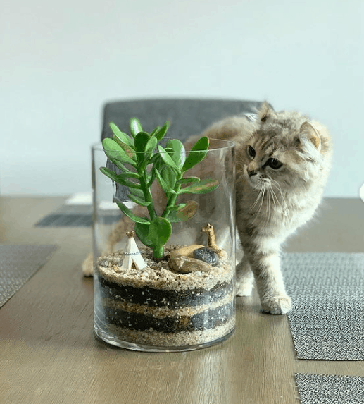 Terrariums are great to keep your pet away from your succulents