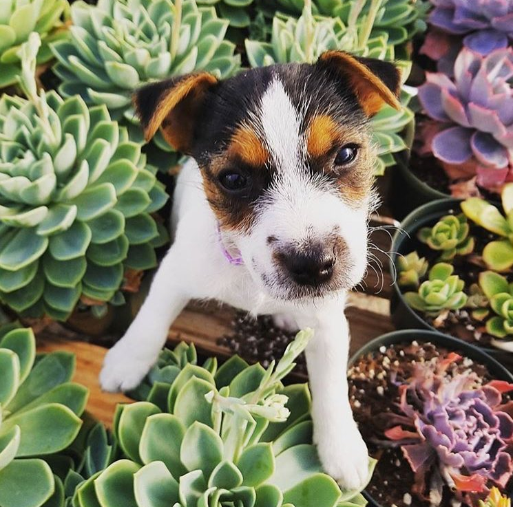 Why Are Some Succulents Poisonous?