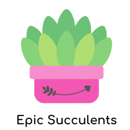 Epic Succulents