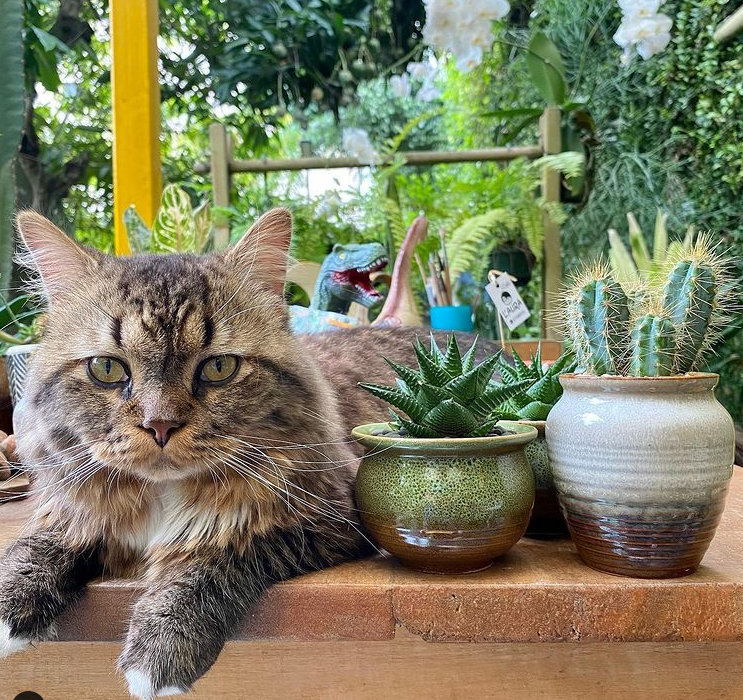 Are Succulents Poisonous To Dogs, Cats, Birds, And Other Pets?