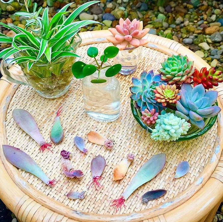 How To Propagate Succulents - 2 Easy Ways Complete Guide