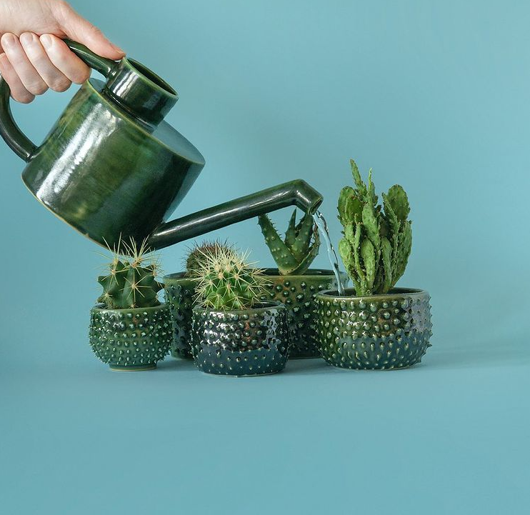 How To Care For A Cactus - Water Requirements