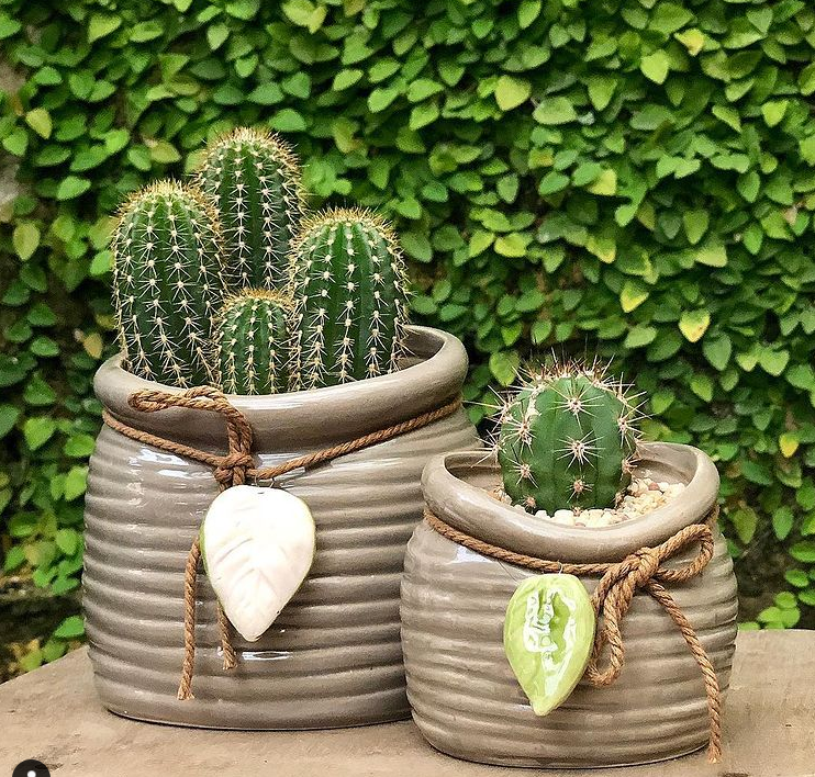 How To Care For A Cactus